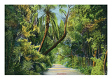 Florida - Overgrown Vegetation Scene Giclée-Premiumdruck von  Lantern Press