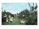 Florida - People Picking Oranges Print by  Lantern Press