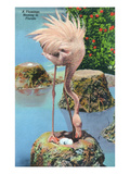 Florida - Flamingo Nesting Scene Poster by Lantern Press