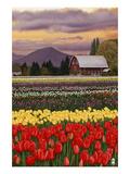 Tulip Farm Prints by  Lantern Press