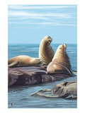 Sea Lions Print by  Lantern Press