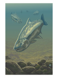 King Salmon Underwater Prints by  Lantern Press