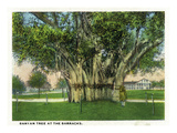 Key West, Florida - Barracks Banyan Tree Scene Posters by  Lantern Press