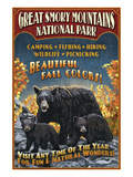 Black Bears - Great Smoky Mountain National Park, Tennessee Art by  Lantern Press