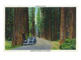 California - Dyerville Flat Scene on the Redwood Highway Kunstdruck von  Lantern Press