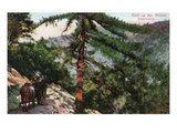 Mt. Wilson, California - View of Hikers Trailing Up the Mountain Print by Lantern Press