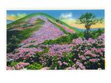 North Carolina - View of Purple Rhododendron in Bloom Near Blue Ridge Parkway Poster par  Lantern Press