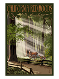 California - Deer and Fawns in Redwoods Posters by  Lantern Press
