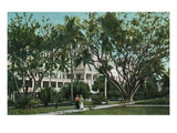 Palm Beach, Florida - Royal Poinciana Gardens Scene Prints by  Lantern Press
