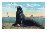 Santa Catalina Island, California - View of Old Ben the Giant Sea Lion on Dock Póster por Lantern Press