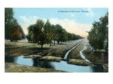 Florida - Orchard Irrigation Scene Poster von  Lantern Press