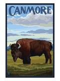Canmore, Alberta, Canada - Solo Bison Prints by  Lantern Press