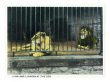 Cincinnati, Ohio - Zoological Gardens Lion Cage Scene Póster por Lantern Press