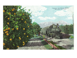 California - Train Passing Through Orange Groves Prints by  Lantern Press