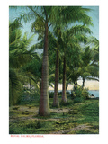 Florida - View of Royal Palms Poster by  Lantern Press