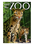 Clouded Leopard - Visit the Zoo Art by Lantern Press