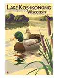 Lake Koshkonong, Wisconsin - Mallard Ducks Prints by  Lantern Press