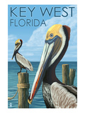 Key West, Florida - Brown Pelican Posters par  Lantern Press