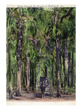 Ormond, Florida - Horse Carriage in the Forest Prints by  Lantern Press