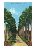 Miami, Florida - View of Royal Palms Art by  Lantern Press