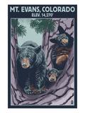 Mt. Evans, Colorado Elv. 14,270 - Black Bear Family Affiches par  Lantern Press