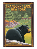 Cranberry Lake, New York - Black Bear in Forest Print by Lantern Press 