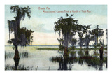 Eustis, Florida - Cypress Trees at Trout Run Mouth Prints by Lantern Press