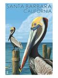 Santa Barbara, California - Pelican Art par  Lantern Press