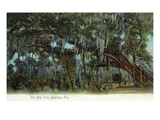 Daytona Beach, Florida - View of the Big Tree Art par Lantern Press