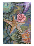 Tidepools - Vero Beach, Florida Prints by  Lantern Press