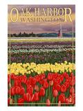 Oak Harbor, Washington - Tulip Fields Poster by  Lantern Press