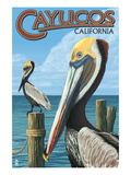 Cayucos, California - Pelicans Poster by Lantern Press