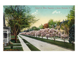 Rochester, New York - Oxford Street White Magnolias in Bloom Posters by  Lantern Press