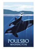Poulsbo, Washington - Orca and Calf Poster by  Lantern Press