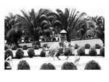 Hollywood, California - Bernheimer Residence, Man on Water Buffalo Photo Prints by  Lantern Press