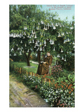 Santa Barbara, California - Monk in Mission Gardens under a Datura Tree Arte por  Lantern Press