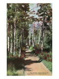 Lake Tahoe, California - Glen Alpine Springs Aspen Road Prints by Lantern Press
