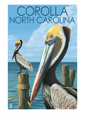 Corolla, North Carolina - Pelicans Poster par  Lantern Press