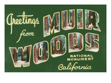 Greetings from Muir Woods National Monument, California Art by Lantern Press