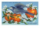 Florida - Mockingbird and Orange Blossoms, State Bird and Flower ポスター : ランターン・プレス