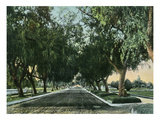 California - View of Pepper Trees Along Road Poster von  Lantern Press