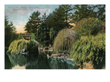 San Francisco, California - Golden Gate Park, View of Alvin Lake Posters by  Lantern Press