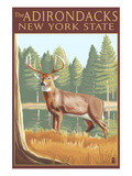 The Adirondacks, New York State - White Tailed Deer Buck Prints by  Lantern Press