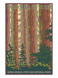 Sierra Nevada State and National Parks, California - Forest Scene Prints by  Lantern Press
