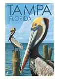 Tampa, Florida - Pelicans Posters par  Lantern Press