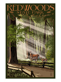 Redwoods State Park - Deer and Fawns Prints by  Lantern Press