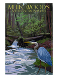 Muir Woods National Monument, California - Blue Heron Posters by  Lantern Press