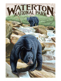 Waterton National Park, Canada - Black Bears and Waterfall Prints by Lantern Press 