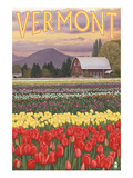 Vermont - Tulip Fields Art by  Lantern Press