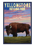 Yellowstone National Park - Bison and Sunset Plakat af  Lantern Press